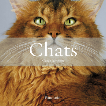Chats (Coffret)